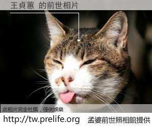 王貞蕙 的前世相片