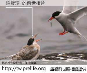 謝賢璟 的前世相片