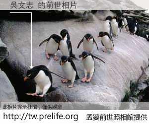 吳文志 的前世相片